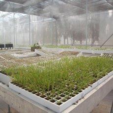 Ventilación para controlar la humedad en el invernadero