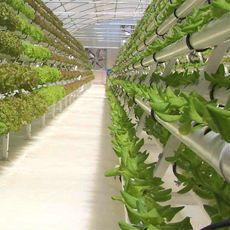 Conozca las ventajas de los invernaderos hidropónicos
