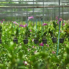 Proteja sus cultivos con Agropinos