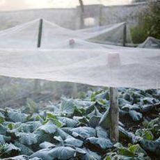 Plantas para proteger del frío