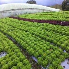 Siembras de cosecha productiva en la sabana de Bogotá