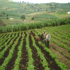 Boyacá: tierra fertil para el agro