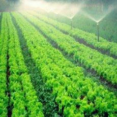 Sistemas de riego para instalar en su invernadero